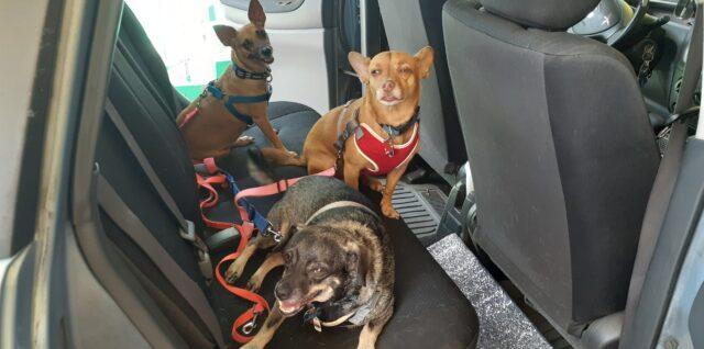 perros, mascotas